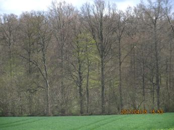 Det var det nærmeste jeg kom solbeskinnet skovbryn, der grønnes