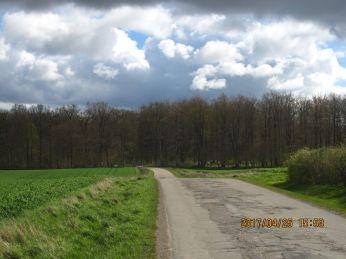 På tilbageturen ville jeg gerne have et billede af et solbeskinnet skovbryn, der grønnes