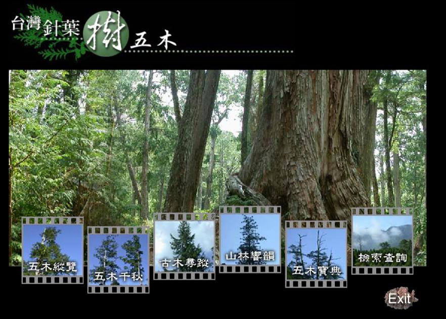 台灣針五木web