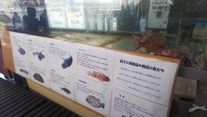 生しらす,静岡県,富士市 漁協食堂
