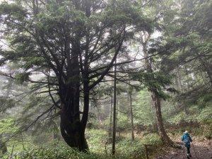 【2019.7.14志賀高原池巡りトレッキング】