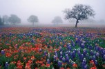 texas_wildflowers_4_edited
