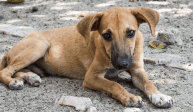 3 solutions to solving the problem of stray dogs in the US