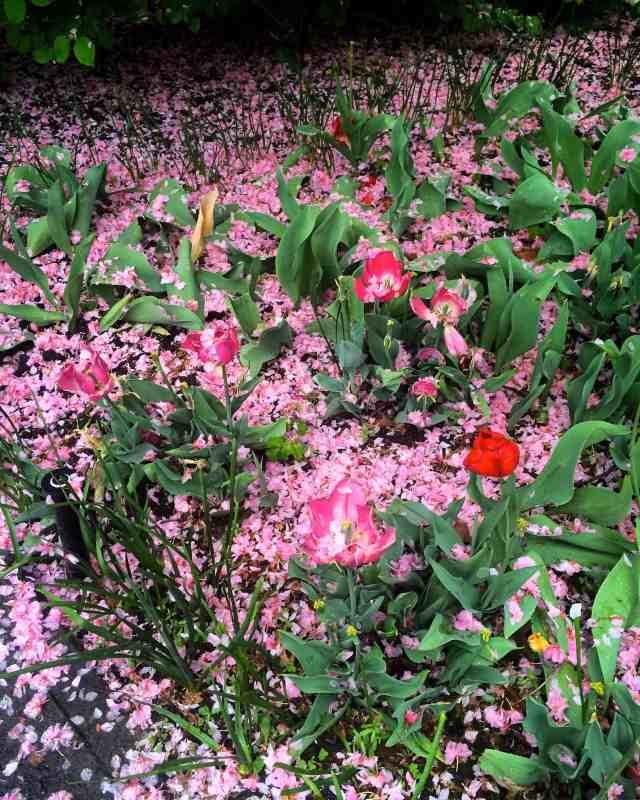 bk-flower-petals