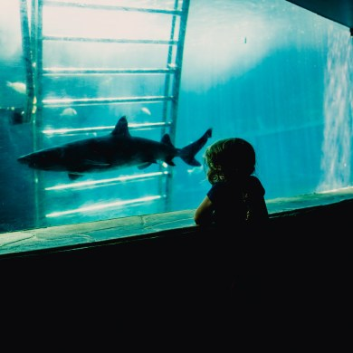 unschooling field trip to sea life park, girl looking at shark, bold image