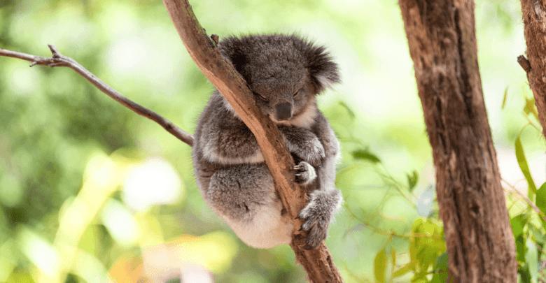 Hug an Australian Day