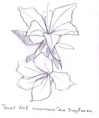 нарисовать цветок орхидеи карандашом рисуем орхидею