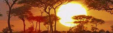 Lo que el Serengueti nos enseña sobre la ciencia