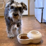 8 a.m. — Pongo, a 4-year-old Miniature Schnauzer, eagerly awaits to eat his breakfast in Marion, S.D., on Tuesday, April 14, 2020.