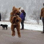 1 p.m. —Mckenzie's family watches as Finnegan, their goldendoodle, attempts (and fails) to chase after a golfball on Tuesday, April 14, 2020, in Rapid City, S.D.