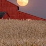 Pisces Full Moon Harvest Ritual - Barley Moon