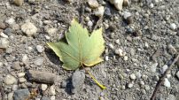 A small leaf that caught my attention