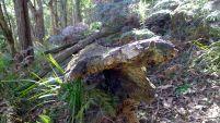 An old log