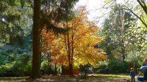 Glowing golden tree