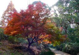 Beautiful maple colours