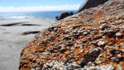 Close up of the orange on the rocks