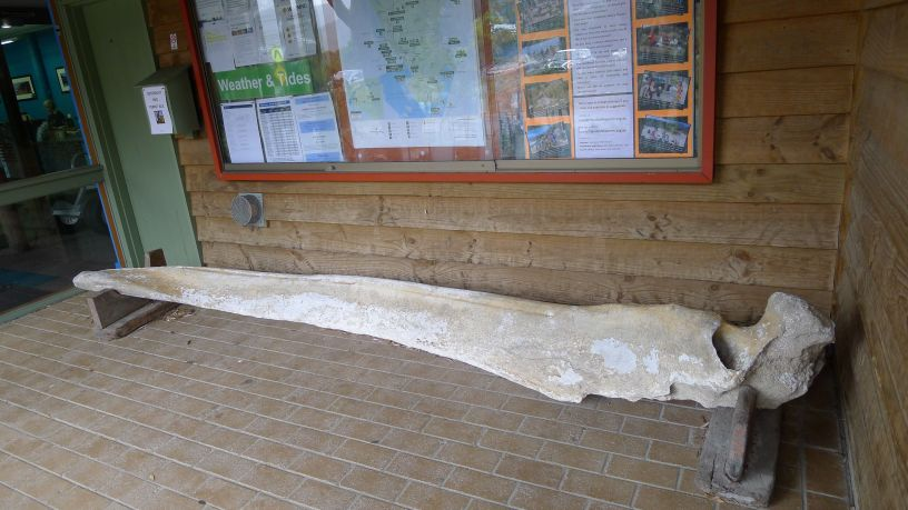 Whale bone outside Visitor Centre - wow that's big!