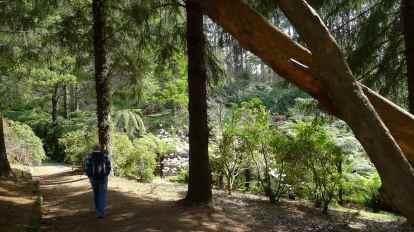 Walking down to a ferny gully