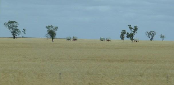 Aliens in the fields