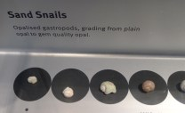 Opalised sand snail shells