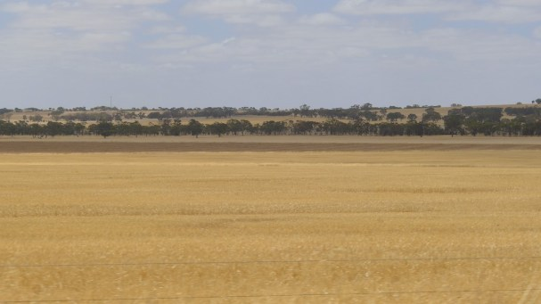 This is what they call The Wimmera