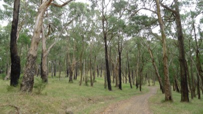 Outlook Rd - Typical bush covering the western hillsides