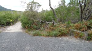 Waterloo Bay Walking Track & Telegraph Track junction