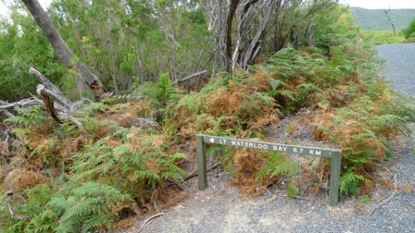 Sign 'D' next to (Little) Waterloo Bay Walking Track showing a small view south of Telegraph Track