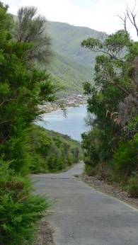 The path down the hill from the lightstation. It is every bit as steep as it looks and possibly more.