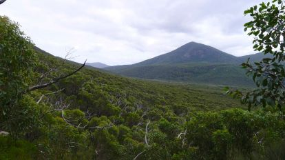 10/15 Eucalypts spread across the valley