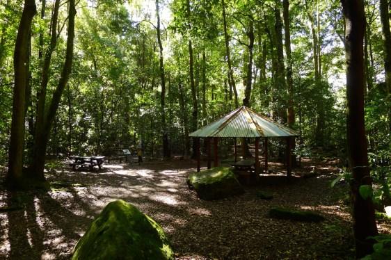 Leura Forest picnic area