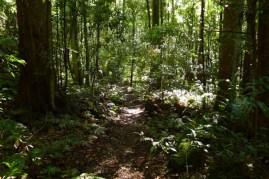 Beautiful green Leura Forest