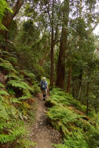 Federal Pass Walking Track to Ruined Castle