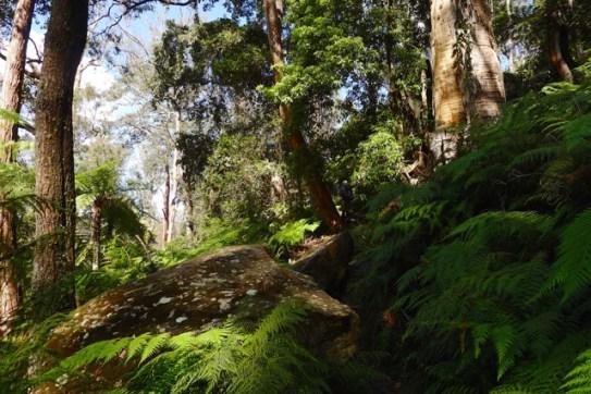 Not the same as Leura Forest, but still beautiful to walk through