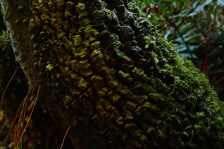 The highly textured and mossy trunk of a fern tree (I think?)