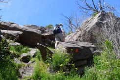 Following the track markers through the boulders along Razorback Track