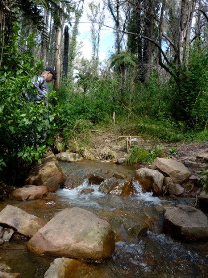 Sep 2010 - Crossing the creek in MacLennans Gully - today there's a nice shiny bridge
