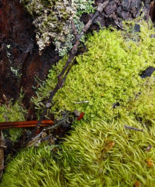 Other bryophytes the tree is hosting