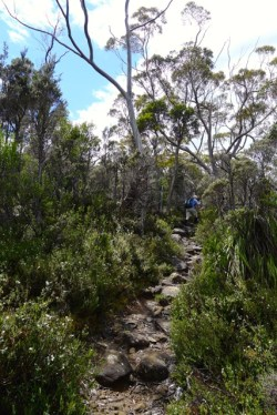 The grey forest gave way to more diverse flora further up the slope