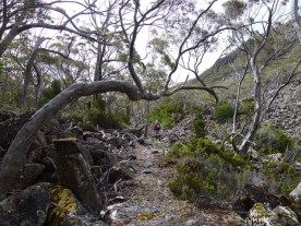 The twisted trees speak of the harsh conditions in this alpine environment