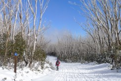 Setting off down Royston Trail - the ungroomed snow here was very welcome