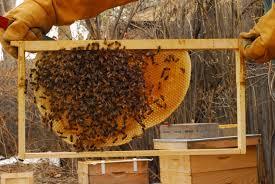 Bee-keeping (Apiary) Business Plan in Nigeria