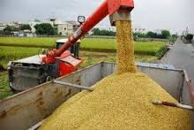 RICE CULTIVATION AND PROCESSING BUSINESS PLAN IN NIGERIA