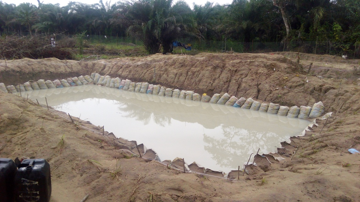 5 Ways to Make Money from Cat Fish Farming in Nigeria
