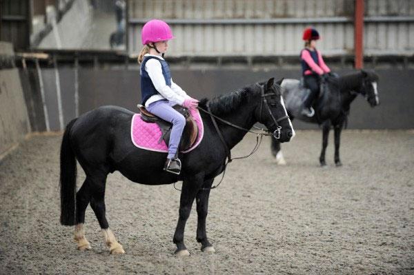 festina lente equestrian centre