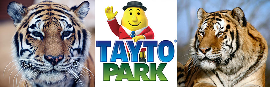 Tayto Park Celebrates International Tiger Day