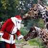 visit santa at dublin zoo