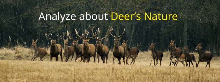 Analyze about Deer's Nature
