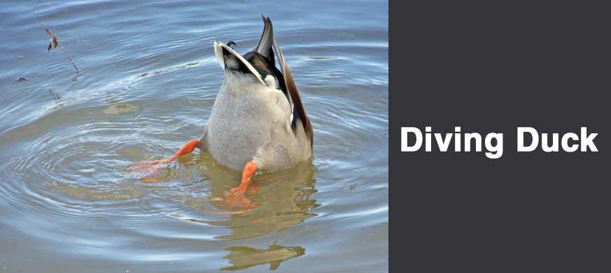 Diving Duck Decoy Tips