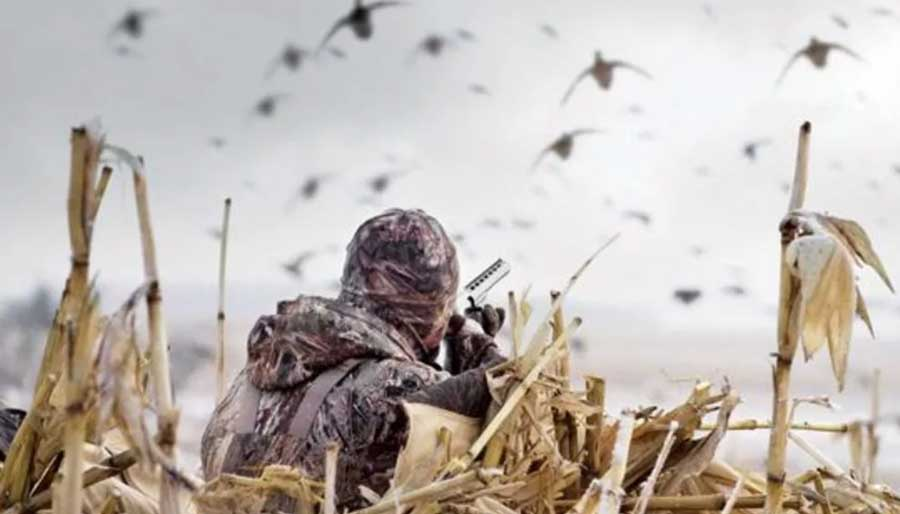 Field Shooting of duck